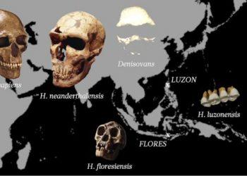 Homo luzonensis
