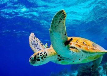 La tortuga de la isla