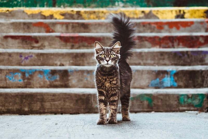 Huellas de gato por Miguel Aranguren