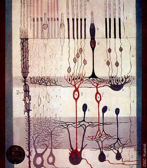 Esquema de la retina de Santiago Ramón y Cajal. Imagen: Instituto Cajal, CSIC, Madrid.