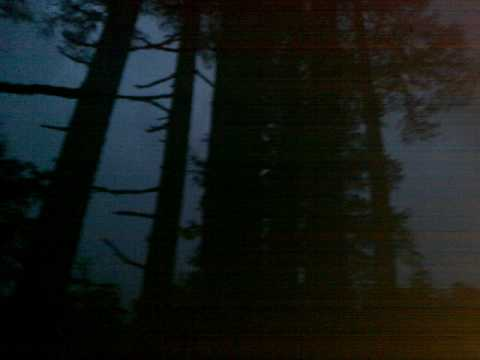 Cedro tormenta en la noche haiku Matsuo Bashō